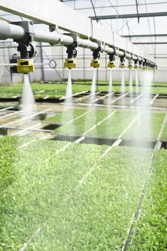 watering seedlings with a greenhouse irrigation system